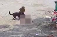 Bị chó dữ lao vào tấn công giữa đường, cụ bà tử vong thương tâm, hành động của người tài xế gần đó gây phẫn nộ tột độ