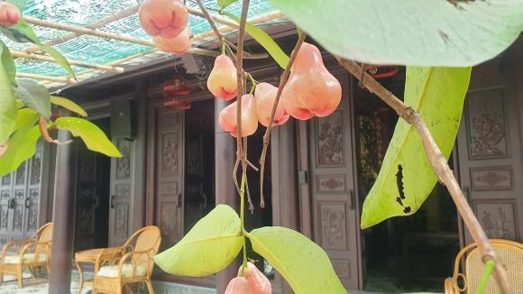 Không gian nhà vườn 600 m2 của vợ chồng Kiwi Ngô Mai Trang-9