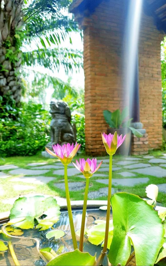 Không gian nhà vườn 600 m2 của vợ chồng Kiwi Ngô Mai Trang-11