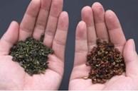 Trộn trà và hạt tiêu với nhau không ngờ lại giải quyết được rắc rối của hàng triệu gia đình