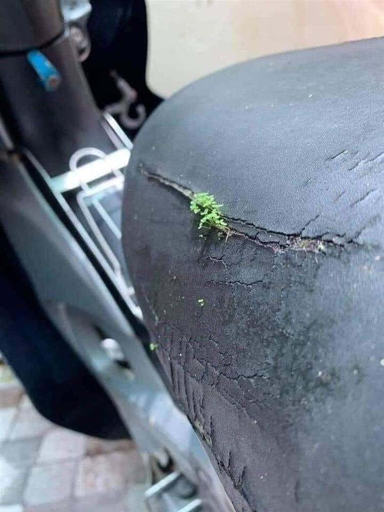 Sau gần 3 tháng mới sờ đến xe máy, nhiều người ngơ ngác khi cây cối mọc hẳn trên yên-2