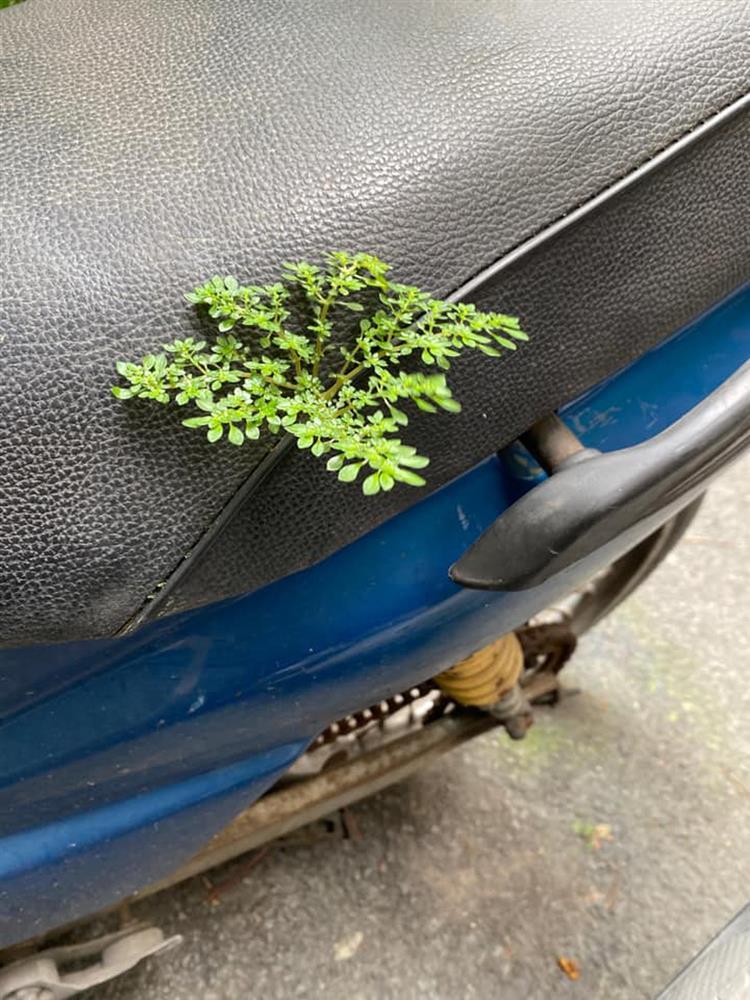 Sau gần 3 tháng mới sờ đến xe máy, nhiều người ngơ ngác khi cây cối mọc hẳn trên yên-7