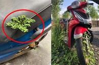 Sau gần 3 tháng mới sờ đến xe máy, nhiều người ngơ ngác khi cây cối mọc hẳn trên yên