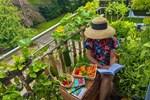 Ban công ngập rau củ quả xanh mướt mắt trong không gian 2,5m² 'đứng còn phải nhường nhau' của mẹ Việt