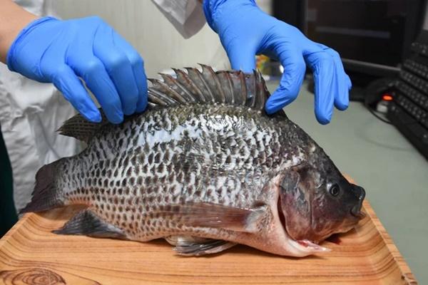 Người phụ nữ bị vi khuẩn ăn cụt bàn tay chỉ sau vài giờ từ vết xước do vảy cá gây ra, bác sĩ đưa ra 6 lời khuyên để ngăn ngừa bị nhiễm bệnh-4