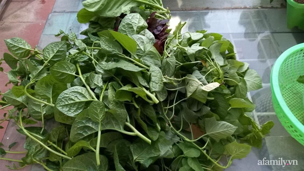 Khoảng sân thượng chỉ 15m² nhưng đủ các loại rau xanh tốt tươi không lo thiếu thực phẩm mùa dịch ở Hà Nội-13