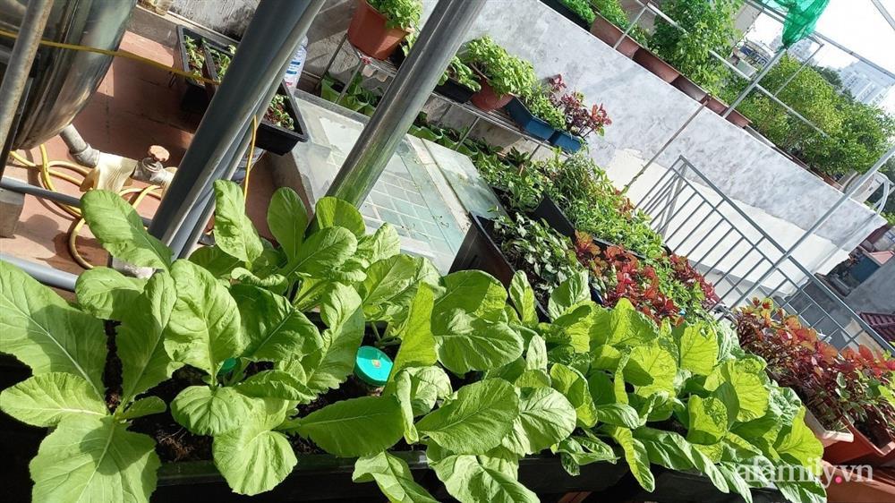 Khoảng sân thượng chỉ 15m² nhưng đủ các loại rau xanh tốt tươi không lo thiếu thực phẩm mùa dịch ở Hà Nội-14