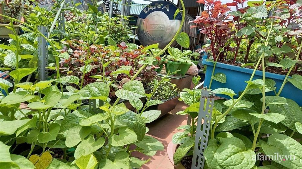 Khoảng sân thượng chỉ 15m² nhưng đủ các loại rau xanh tốt tươi không lo thiếu thực phẩm mùa dịch ở Hà Nội-17