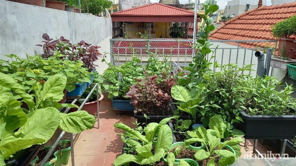 Khoảng sân thượng chỉ 15m² nhưng đủ các loại rau xanh tốt tươi không lo thiếu thực phẩm mùa dịch ở Hà Nội-19
