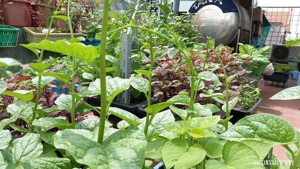 Khoảng sân thượng chỉ 15m² nhưng đủ các loại rau xanh tốt tươi không lo thiếu thực phẩm mùa dịch ở Hà Nội-20