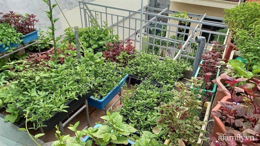 Khoảng sân thượng chỉ 15m² nhưng đủ các loại rau xanh tốt tươi không lo thiếu thực phẩm mùa dịch ở Hà Nội-21