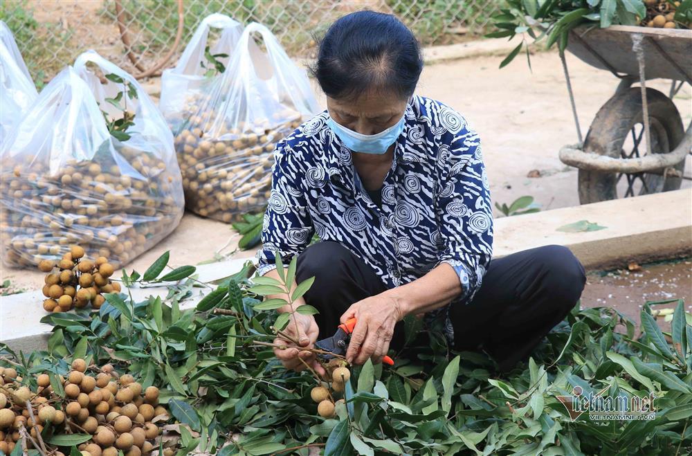 Chưa bao giờ buồn như năm nay: Nhãn Hưng Yên mất mùa, giá rẻ hơn rau-2