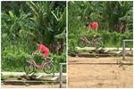 Bé gái đu hẳn người trên xe đạp như làm xiếc, nghịch ngợm thế này các mẹ cũng 'chào thua'