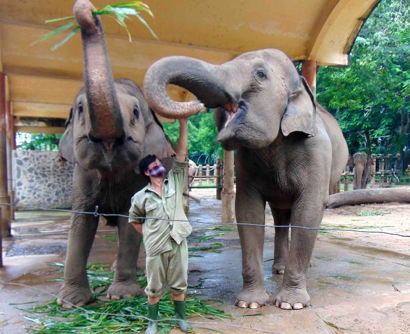 Nghệ sĩ và CĐM chuyển khoản liền tay cứu trợ bầy thú ở Thảo Cầm Viên: Mong không bé nào thiếu ăn trong mùa dịch-1