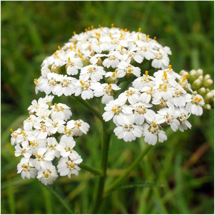 Để giảm stress và thêm yêu đời thì đừng bỏ qua việc trồng 4 loài hoa này trong nhà-1