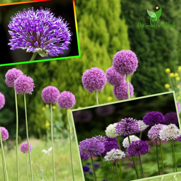 Để giảm stress và thêm yêu đời thì đừng bỏ qua việc trồng 4 loài hoa này trong nhà-2