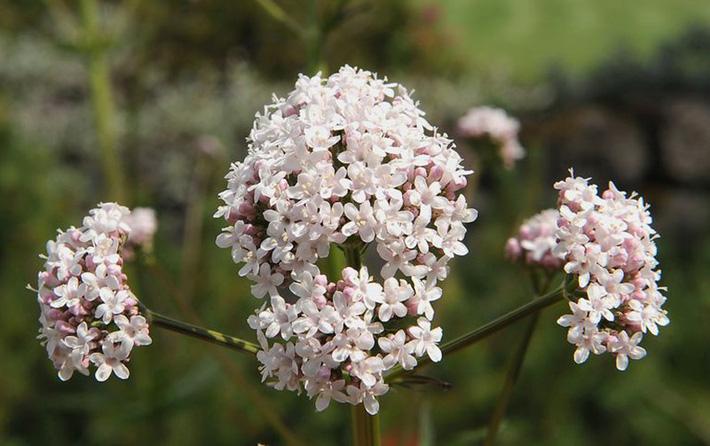 Để giảm stress và thêm yêu đời thì đừng bỏ qua việc trồng 4 loài hoa này trong nhà-5