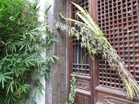 4 loại hoa đẹp đuổi muỗi kỳ cựu, trồng một chậu ngoài ban công, muỗi không dám bén mảng-4