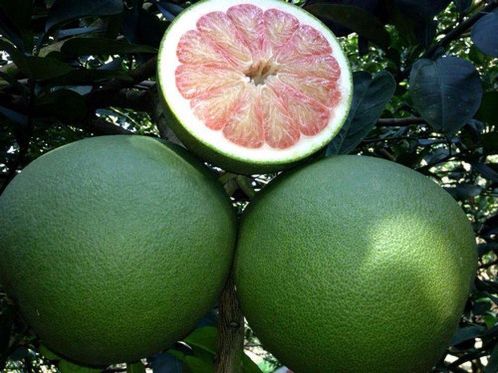 Năm loại trái cây không hạt làm mưa làm gió trên thị trường-5