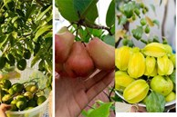 Trầm trồ khu vườn trên sân thượng, trĩu trịt cây trái của cặp vợ chồng Sài Gòn