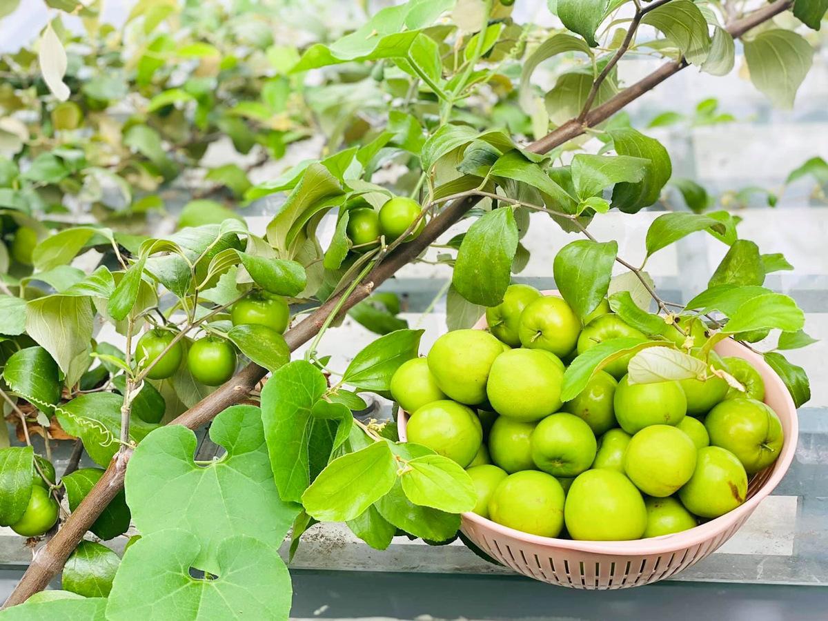 Trầm trồ khu vườn trên sân thượng, trĩu trịt cây trái của cặp vợ chồng Sài Gòn-1