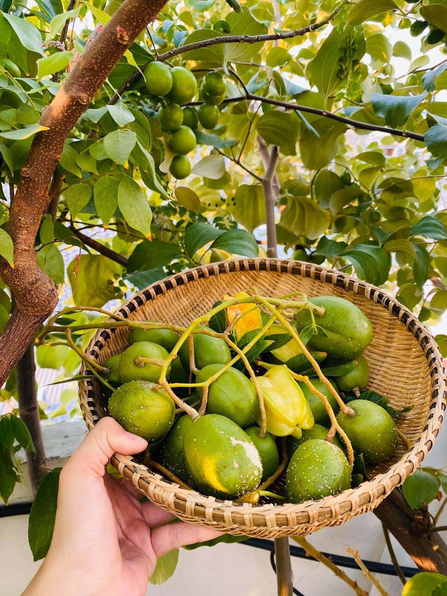 Trầm trồ khu vườn trên sân thượng, trĩu trịt cây trái của cặp vợ chồng Sài Gòn-10