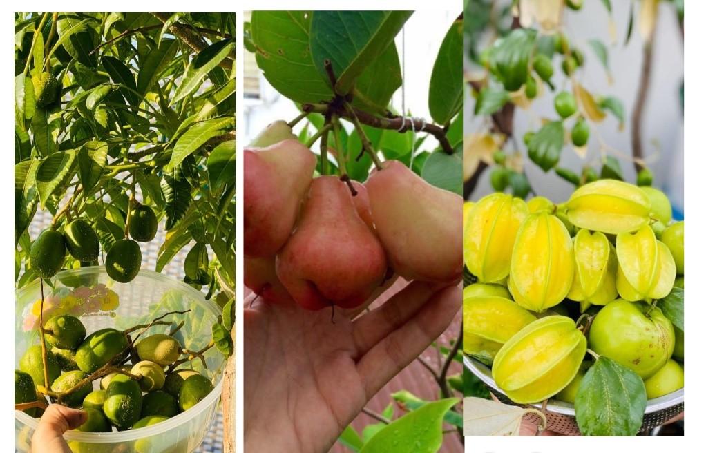 Trầm trồ khu vườn trên sân thượng, trĩu trịt cây trái của cặp vợ chồng Sài Gòn-4
