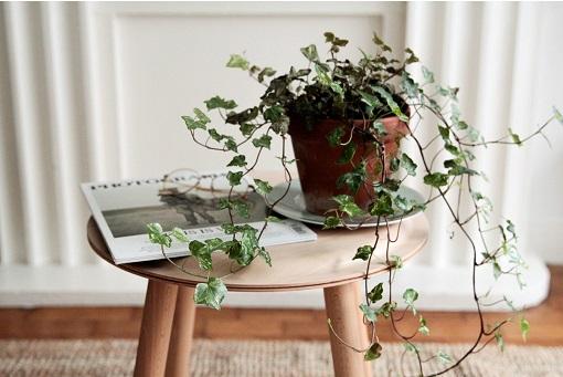 Cây cảnh trong nhà dành cho người bận rộn: Dù ít thời gian chăm sóc, bạn vẫn có những không gian xanh tuyệt vời-7