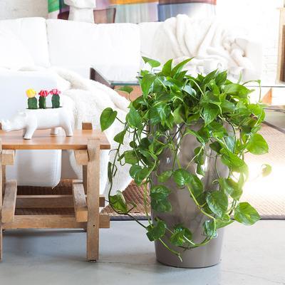 Cây cảnh trong nhà dành cho người bận rộn: Dù ít thời gian chăm sóc, bạn vẫn có những không gian xanh tuyệt vời-9