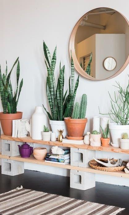 Cây cảnh trong nhà dành cho người bận rộn: Dù ít thời gian chăm sóc, bạn vẫn có những không gian xanh tuyệt vời-8