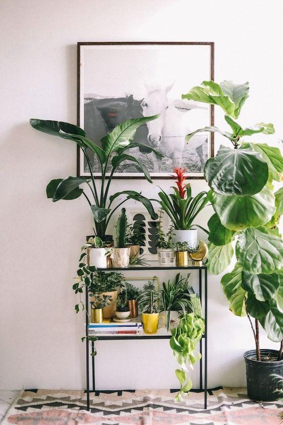 Cây cảnh trong nhà dành cho người bận rộn: Dù ít thời gian chăm sóc, bạn vẫn có những không gian xanh tuyệt vời-12