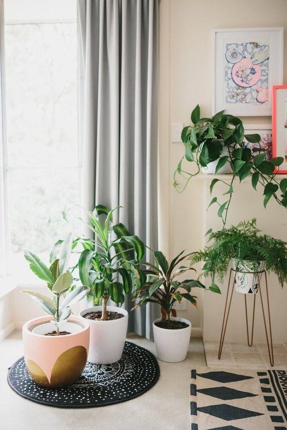 Cây cảnh trong nhà dành cho người bận rộn: Dù ít thời gian chăm sóc, bạn vẫn có những không gian xanh tuyệt vời-18