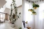 Cây cảnh trong nhà dành cho người bận rộn: Dù ít thời gian chăm sóc, bạn vẫn có những không gian xanh tuyệt vời