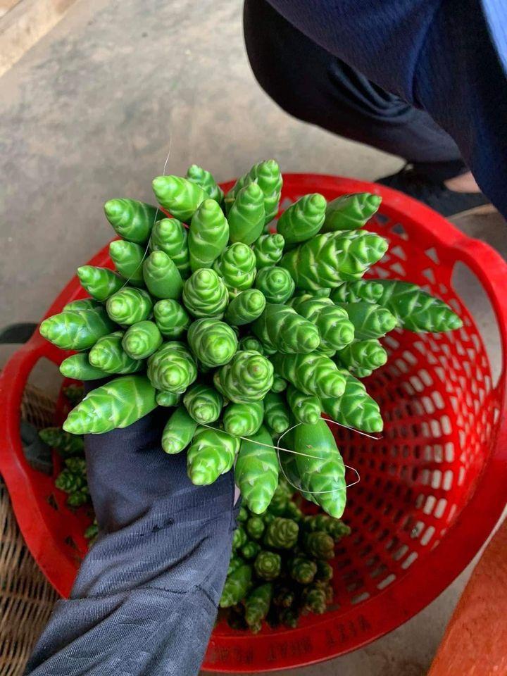 Bất ngờ loại hoa rừng giá chỉ 45 nghìn/kg vừa cắm đẹp lại xào ăn ngon, chị em sành ăn thi nhau lùng mua-1