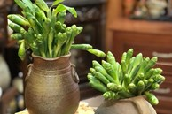 Bất ngờ loại hoa rừng giá chỉ 45 nghìn/kg vừa cắm đẹp lại xào ăn ngon, chị em sành ăn thi nhau lùng mua