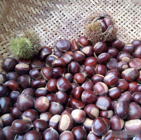 Khi mua hạt dẻ nên chọn hạt tròn hay dẹt? Mách bạn cách bảo quản hạt dẻ, để cả năm vẫn tươi và không bị hôi-5