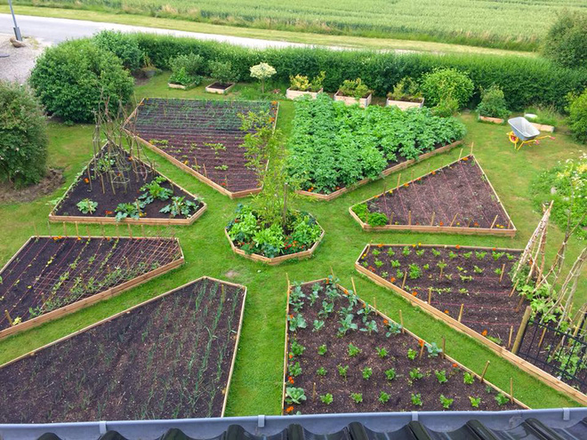 Khu vườn cổ tích của hai chàng trai có cùng sở thích trồng rau, nuôi gà-9