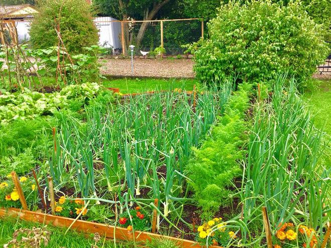 Khu vườn cổ tích của hai chàng trai có cùng sở thích trồng rau, nuôi gà-11