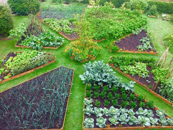 Khu vườn cổ tích của hai chàng trai có cùng sở thích trồng rau, nuôi gà-12