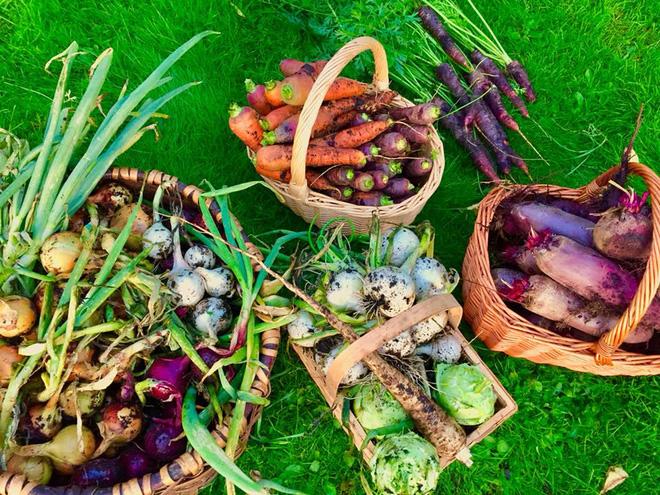 Khu vườn cổ tích của hai chàng trai có cùng sở thích trồng rau, nuôi gà-20
