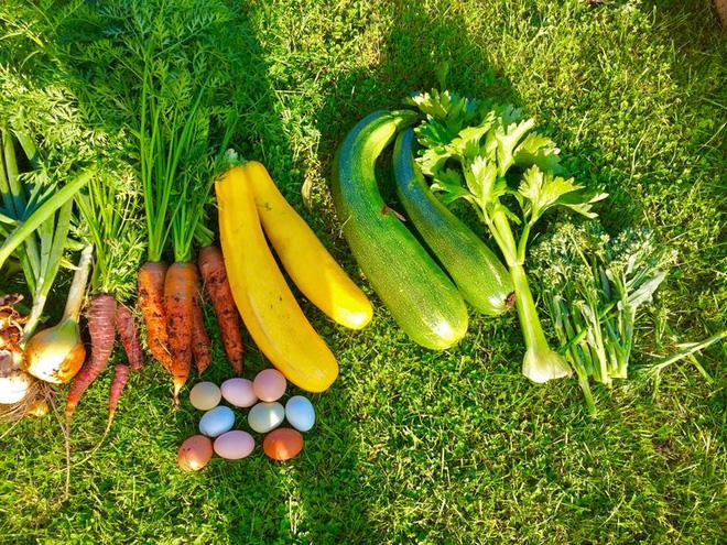 Khu vườn cổ tích của hai chàng trai có cùng sở thích trồng rau, nuôi gà-22