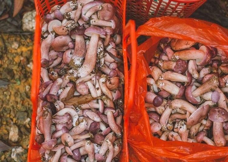 Kỳ lạ loại nấm có vị đắng ngắt nhưng lại là đặc sản giúp người dân hốt bạc mùa mưa-1