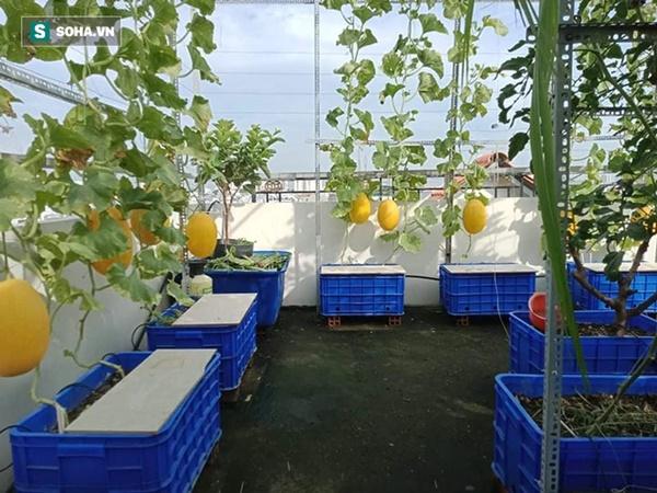 Có gì trong khu vườn của đại gia trái cây trên sân thượng?-5