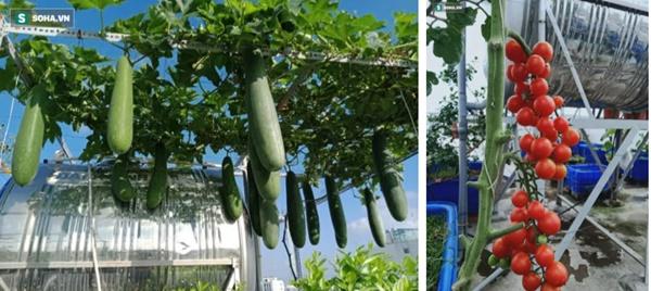 Có gì trong khu vườn của đại gia trái cây trên sân thượng?-4