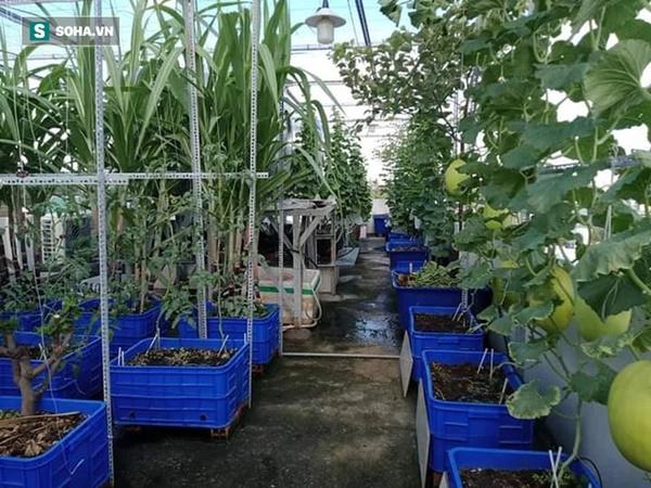 Có gì trong khu vườn của đại gia trái cây trên sân thượng?-3