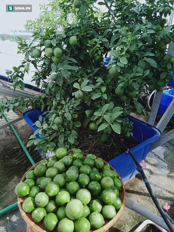 Có gì trong khu vườn của đại gia trái cây trên sân thượng?-2
