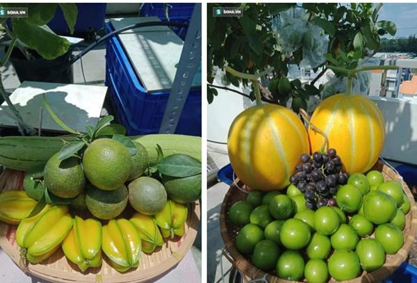 Có gì trong khu vườn của đại gia trái cây trên sân thượng?-12