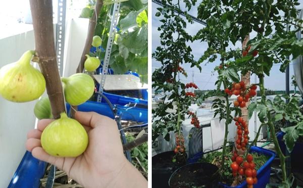 Có gì trong khu vườn của đại gia trái cây trên sân thượng?-11