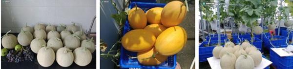 Có gì trong khu vườn của đại gia trái cây trên sân thượng?-9