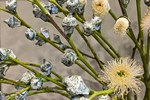 120k/set hoa Tử Châu, chị em nô nức rinh về cắm tím sắc nhà, đốn tim cư dân mạng khiến ai nấy đều nức nở khen-11